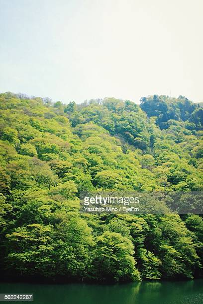 trees on mountain by river - hokuriku region stock photos and pictures