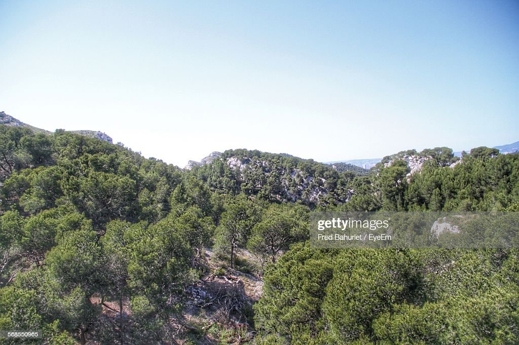 Trees On Mountains Against Clear Sky : Stock Photo