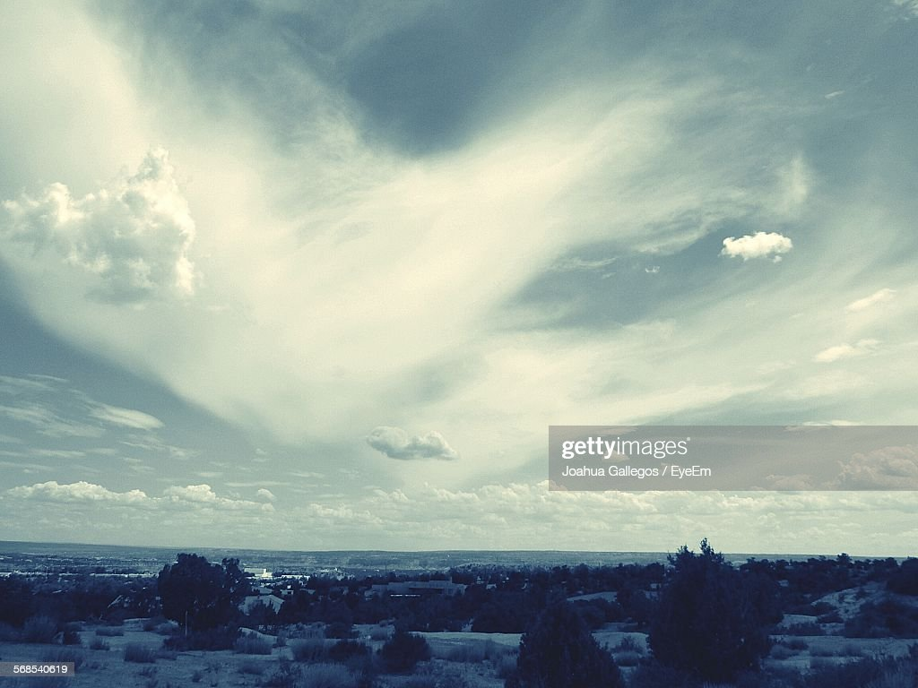 Trees On Shore Against Cloudy Sky : Stock Photo