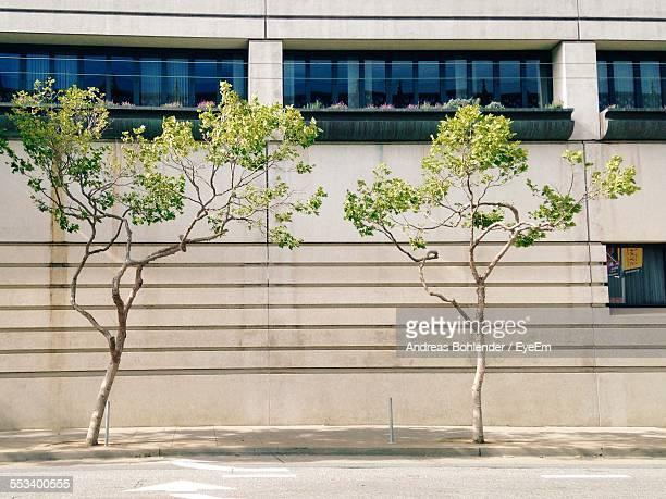 Trees On Sidewalk