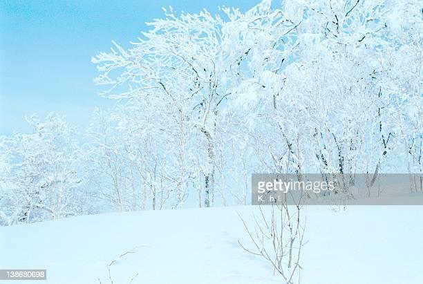 Trees on ski hill