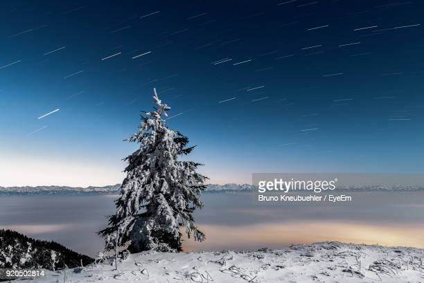 Trees On Snow Against Sky At Night