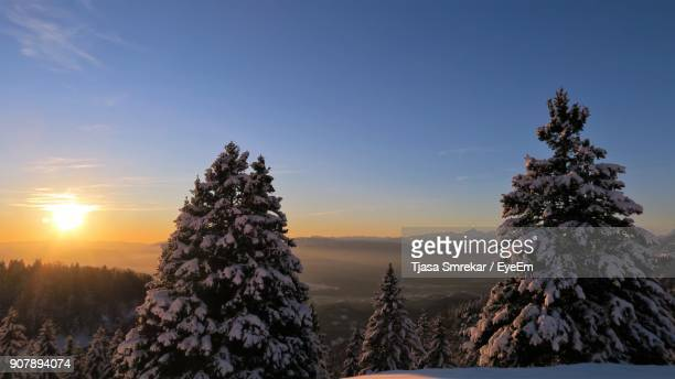 Trees On Snow Against Sky During Sunset