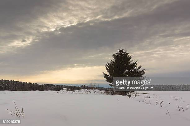 trees on snow covered field against cloudy sky - heinovirta stock pictures, royalty-free photos & images