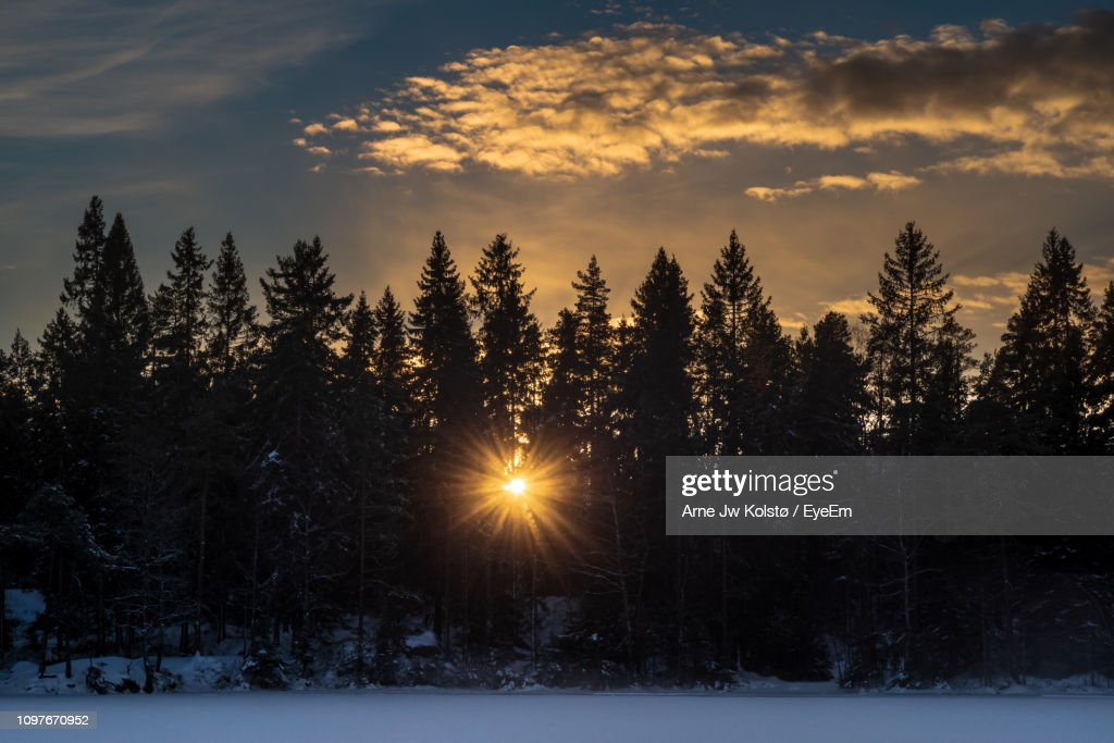 Trees On Snow Covered Field Against Sky At Sunset : Foto de stock