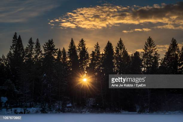Trees On Snow Covered Field Against Sky At Sunset