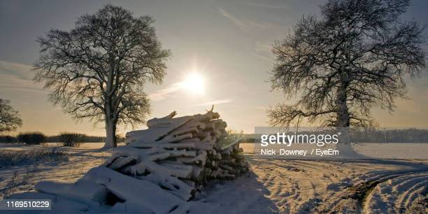 trees on snow covered field against sky during winter - king's lynn stock pictures, royalty-free photos & images