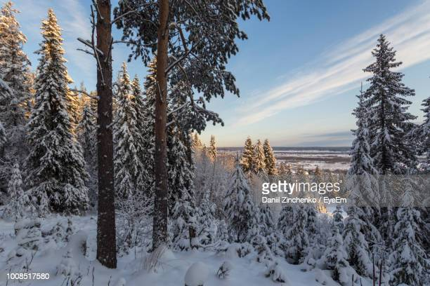 trees on snow covered field against sky - zinchenko stock pictures, royalty-free photos & images