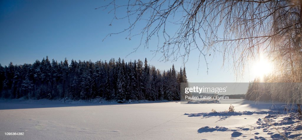 Trees On Snow Covered Field Against Sky : Stockfoto