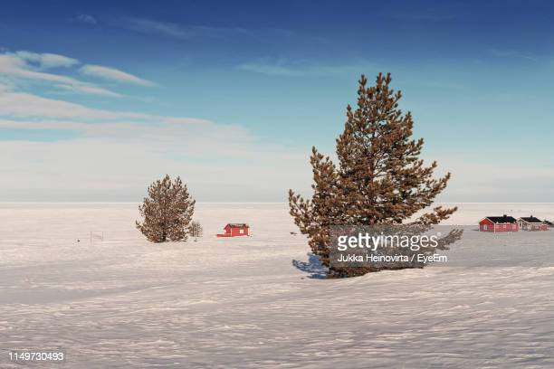 trees on snow covered field against sky - heinovirta stock photos and pictures
