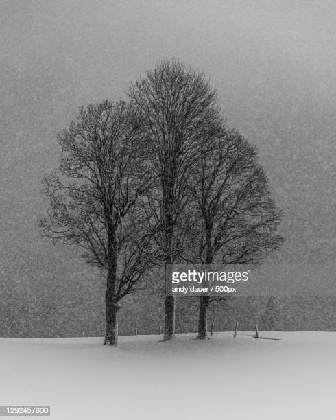 trees on snow covered field against sky - andy dauer stock pictures, royalty-free photos & images