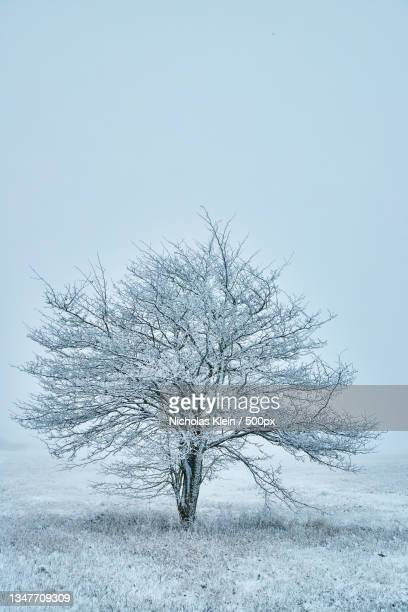 trees on snow covered field against sky - klein stock pictures, royalty-free photos & images