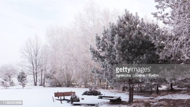 Trees On Snow Covered Field During Winter