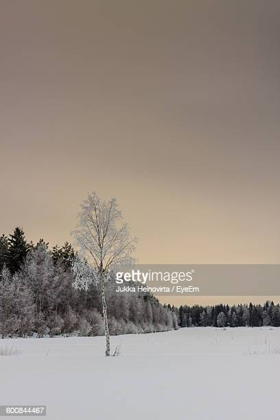 trees on snow covered field during winter - heinovirta stock pictures, royalty-free photos & images