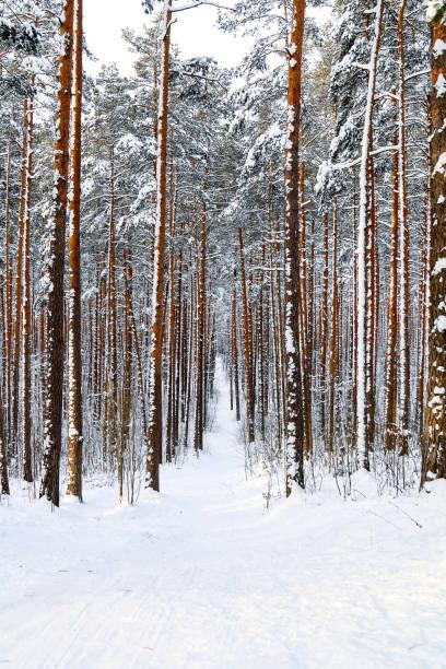 Trees on snow covered field,Latvia