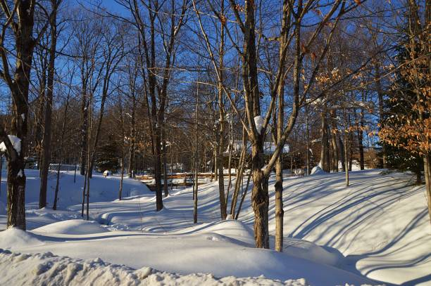 Trees on snow covered field,Quebec,Canada