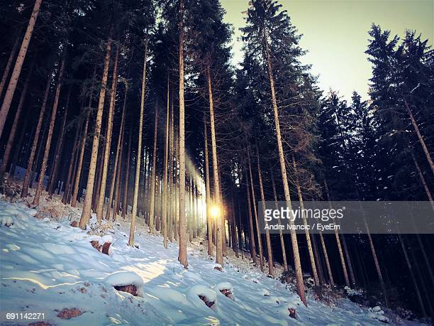 Trees On Snow Covered Forest Against Sky