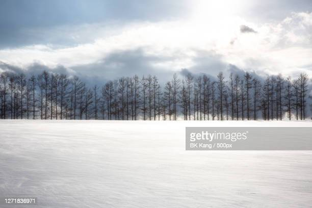 trees on snow covered land against sky, asahikawa, japan - images ストックフォトと画像