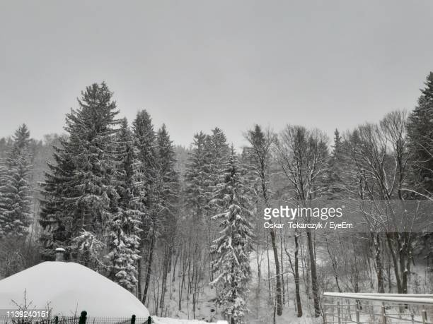 trees on snow covered land against sky - oskar stock pictures, royalty-free photos & images