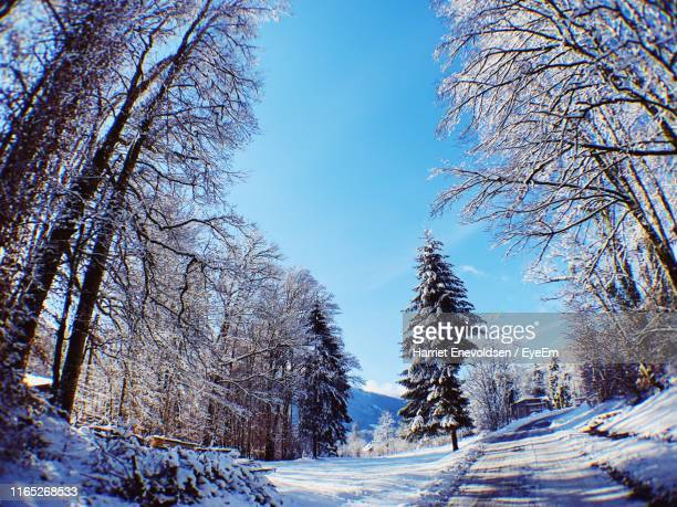 trees on snow covered land against sky - harriet stock photos and pictures