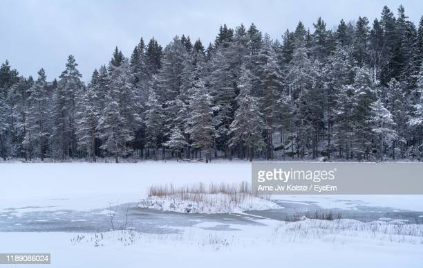 trees on snow covered land against sky - arne jw kolstø stock pictures, royalty-free photos & images