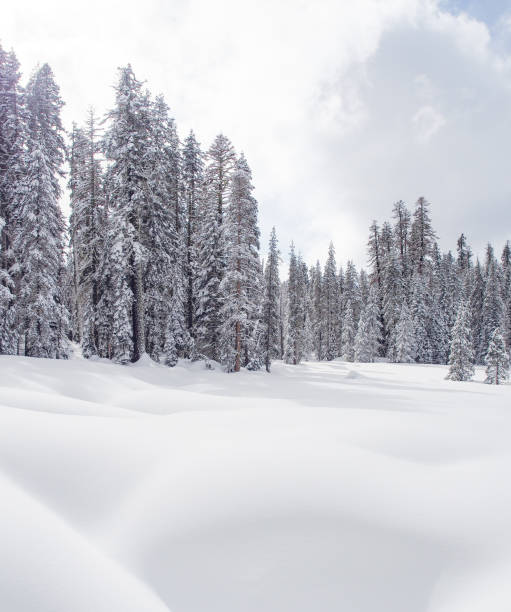 Trees on snow covered land against sky