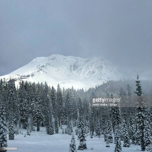 trees on snow covered land against sky,siskiyou county,california,united states,usa - siskiyou stock pictures, royalty-free photos & images