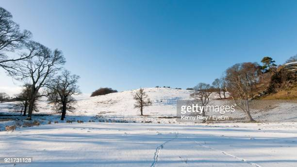 Trees On Snow Covered Landscape Against Clear Blue Sky