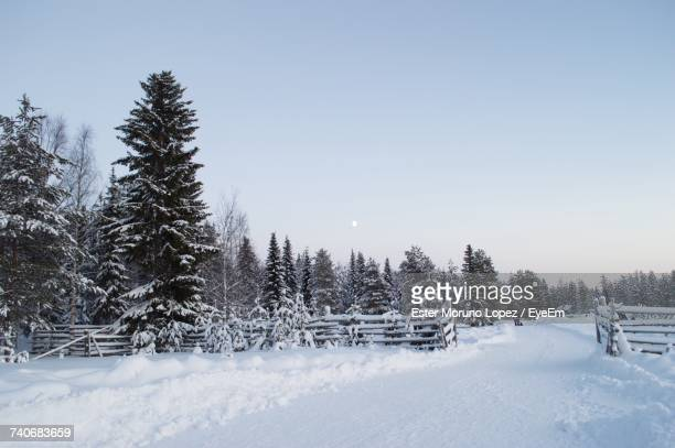 trees on snow covered landscape against clear sky - moruno stock pictures, royalty-free photos & images