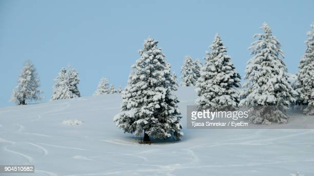 Trees On Snow Covered Landscape Against Clear Sky
