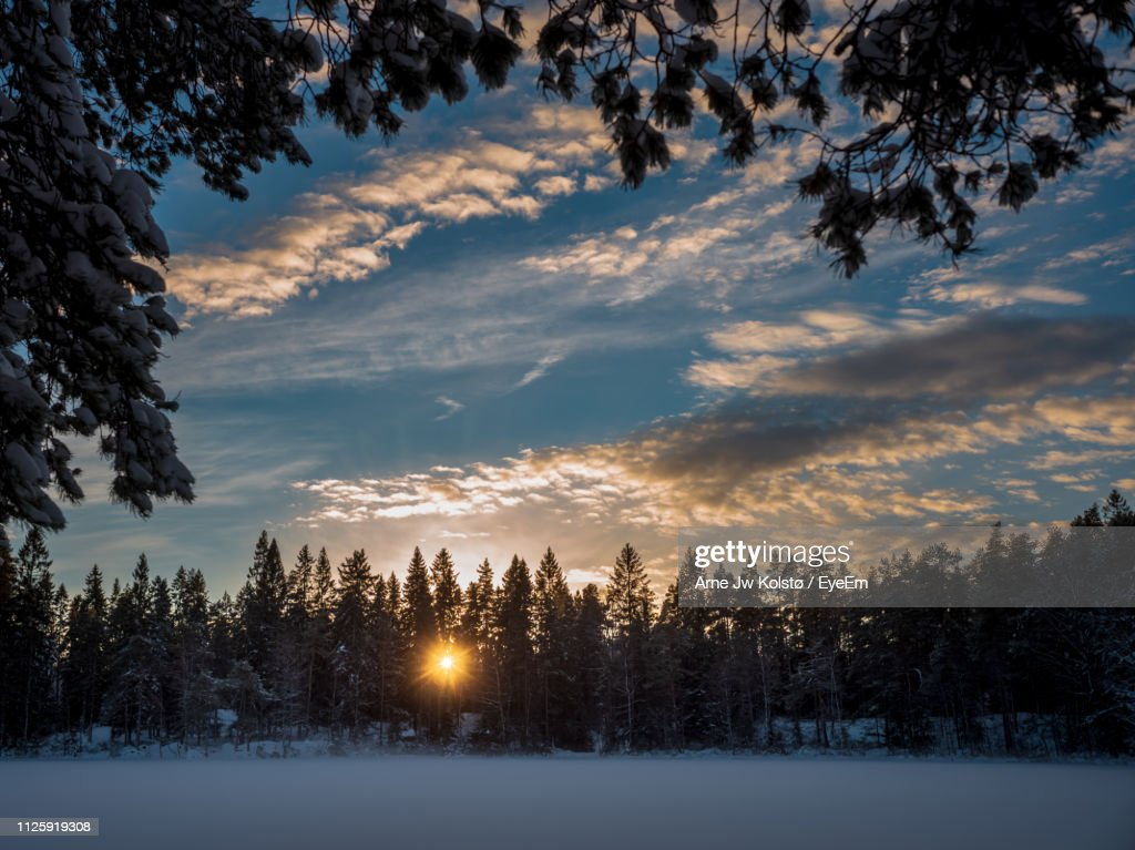Trees On Snow Covered Landscape Against Sky During Sunset : Stock Photo