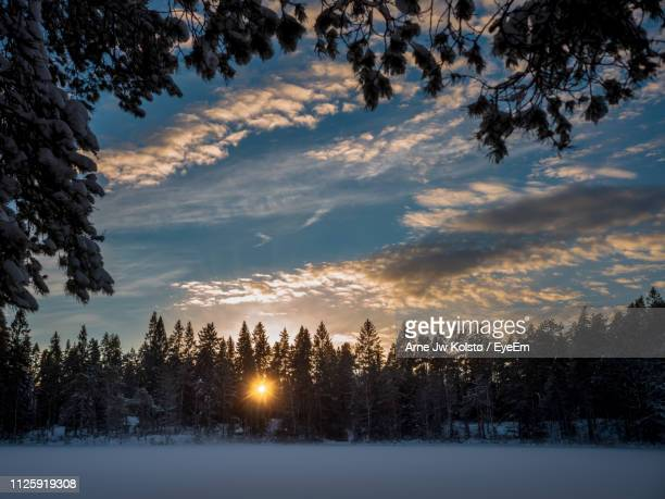 Trees On Snow Covered Landscape Against Sky During Sunset