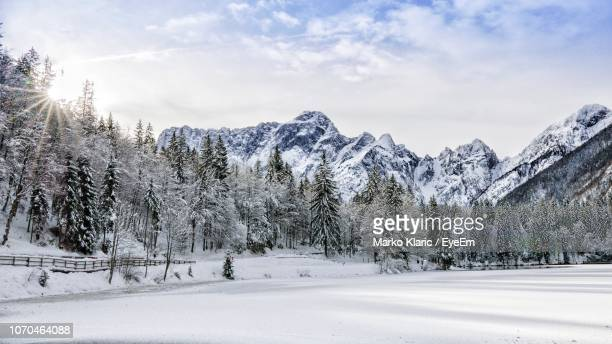 trees on snow covered landscape against sky - polar climate stock pictures, royalty-free photos & images