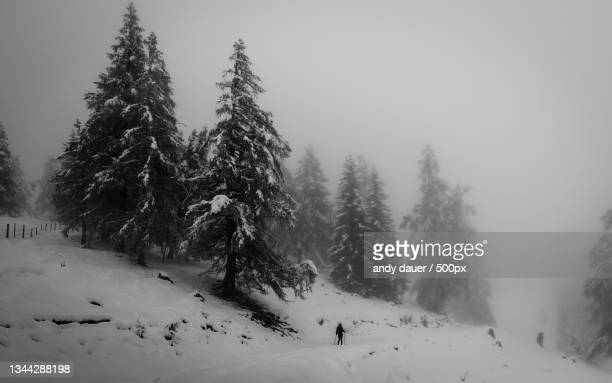 trees on snow covered landscape against sky - andy dauer stock pictures, royalty-free photos & images