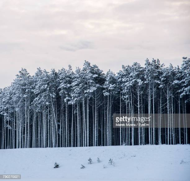 Trees On Snow Covered Landscape Against Sky