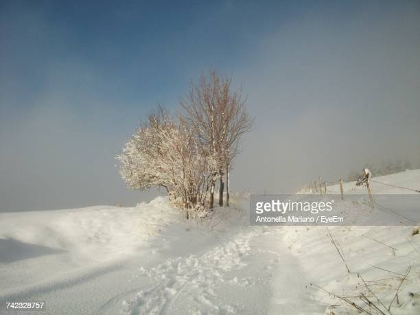 trees on snow covered landscape against sky - antonella stock photos and pictures