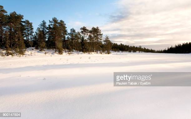 trees on snow covered landscape against sky - paulien tabak stock-fotos und bilder