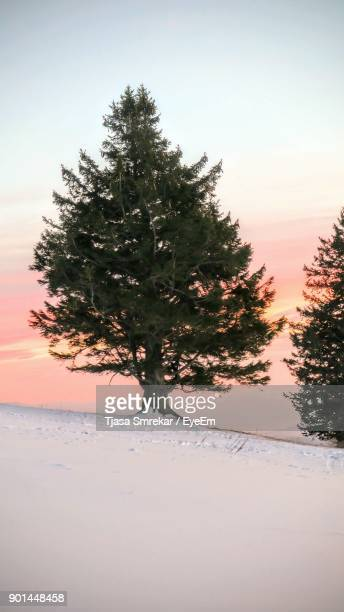 trees on snow covered landscape against sky - kranj stock pictures, royalty-free photos & images