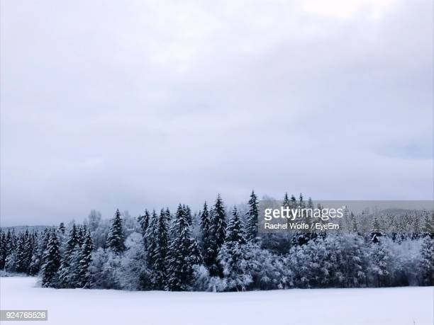 trees on snow covered landscape against sky - rachel wolfe stock pictures, royalty-free photos & images