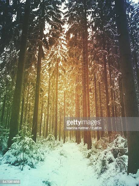 Trees On Snow Covered Landscape During Winter