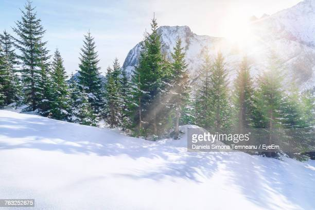 Trees On Snow Covered Landscape In Austria