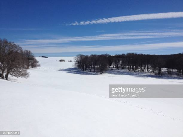 trees on snow covered landscape - cantal stock pictures, royalty-free photos & images