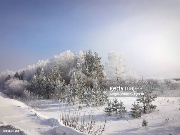 trees on snow covered landscape - nizhny novgorod oblast stock photos and pictures