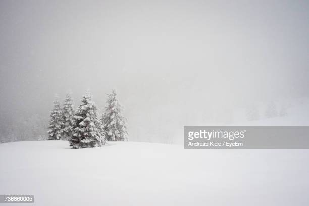 trees on snow covered landscape - christmas scenes stock photos and pictures
