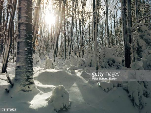 trees on snow covered landscape - boban stock pictures, royalty-free photos & images