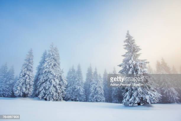 trees on snow covered landscape - snow stock pictures, royalty-free photos & images