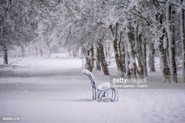 trees on snow covered landscape - milton keynes stock pictures, royalty-free photos & images