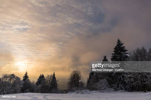 Trees On Snow Field Against Sky During Sunset