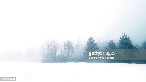 trees on snow field against sky in foggy weather - ミネソタ州 ストックフォトと画像