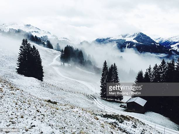 Trees On Snowcapped Landscape With Log Cabin On Foggy Day